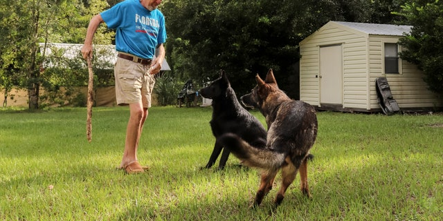 Lothar Weimann plays with his two German Shepherds, Ellie, right, and Willy, in the backyard of his home on Sept. 16, 2021, in Gainesville, Fla. When 68-year-old Weimann suffered a stroke at home in May, Ellie got through three gates and barked furiously to alert a neighbor. (Melissa Hernandez de la Cruz/Fresh Take Florida via AP)