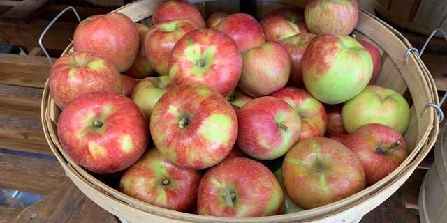 MacGregor Orchard has 27 apple varieties, fruit preserves, apple butter, honey and fresh apple sauce.