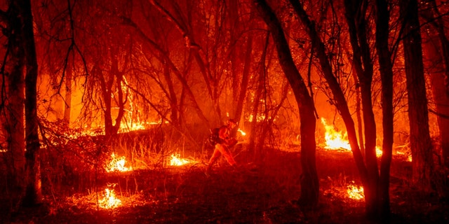 An inmate firefighter from the Trinity River Conservation Camp uses a drip torch to slow the Fawn Fire burning north of Redding, Calif. in Shasta County, di giovedì, Sett. 23, 2021.