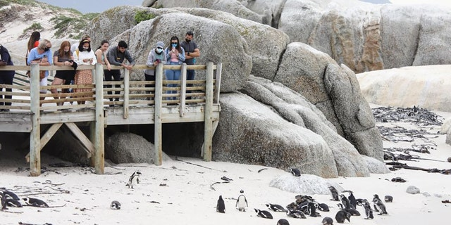 Visitors look at African penguins at Boulders Penguin Colony, Simon's Town, southwest South Africa, April 25, 2021. (Photo by Lyu Tianran/Xinhua via Getty) (Xinhua/Lyu Tianran via Getty Images)