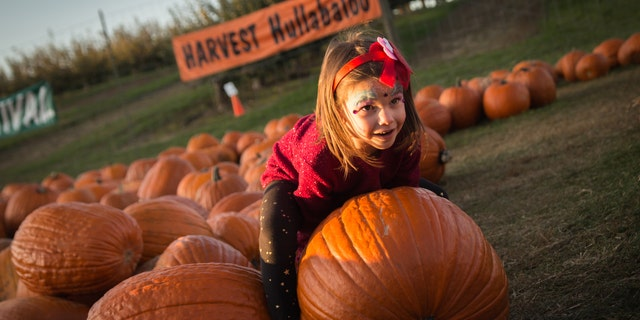 Children eagerly select pumpkins from a pre-picked patch at the popular Harvest House at Green Bluff.
