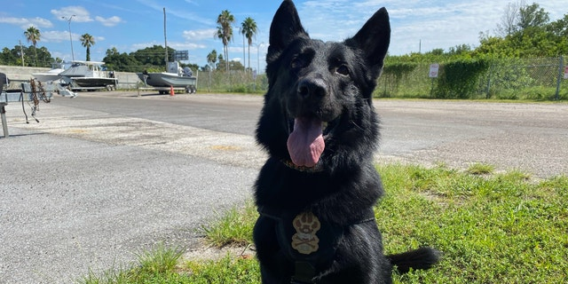 """Duane """"Dog the Bounty Hunter"""" Chapman on Wednesday contracted a private search and rescue K-9 team to search an island called Egmont Key off the coast of Saint Petersburg, Florida, in his search for Brian Laundrie. (Fox News' Michael Ruiz)"""