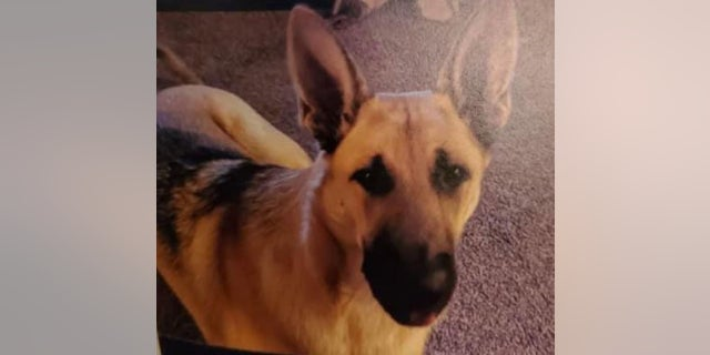 Jacob McCarty, 14, was reportedly found dead with his German shepherd, Isabella, after he vanished last week, authorities told a local news outlet.