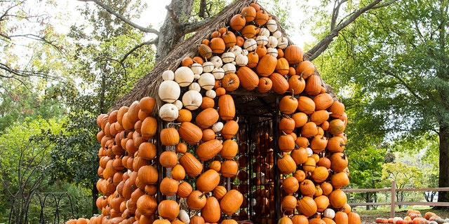 """Cheekwood Harvest in Nashville provides endless fall fun with the """"Pumpkin Village"""" pumpkin patch with two life-sized pumpkin houses, children's art activities, live music, food trucks, and more seasonal merriment."""