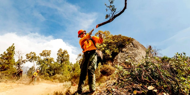 A member of the Roosevelt Hotshot Crew clears a firebreak while battling the Windy Fire on Thursday, Sett. 16, 2021, on the Tule River Reservation, Calif. His crew, which travelled from Colorado, has been battling California wildfires.