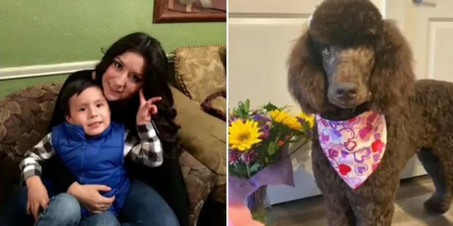 Rico died at the scene while her son was rushed to a hospital, where he remains in critical condition. Rico's poodle, Apollo, also died in the crash.