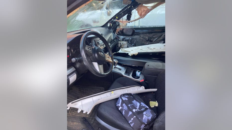 Bear gets trapped in car, destroys interior