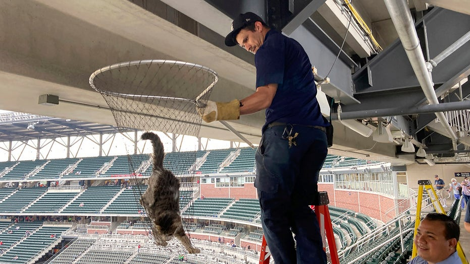 Cat scurries along beam in upper deck before Braves-Phillies