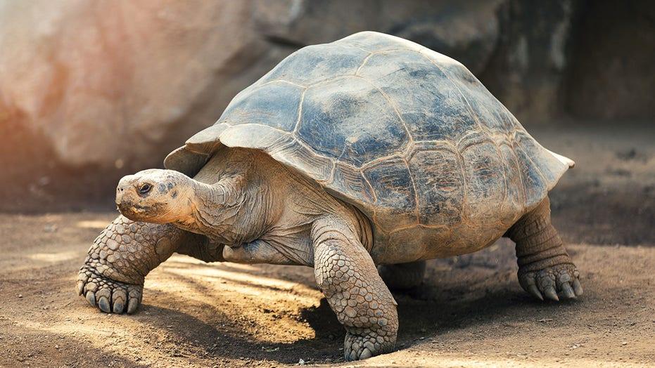 Turtle on runway halts multiple flights in Japan