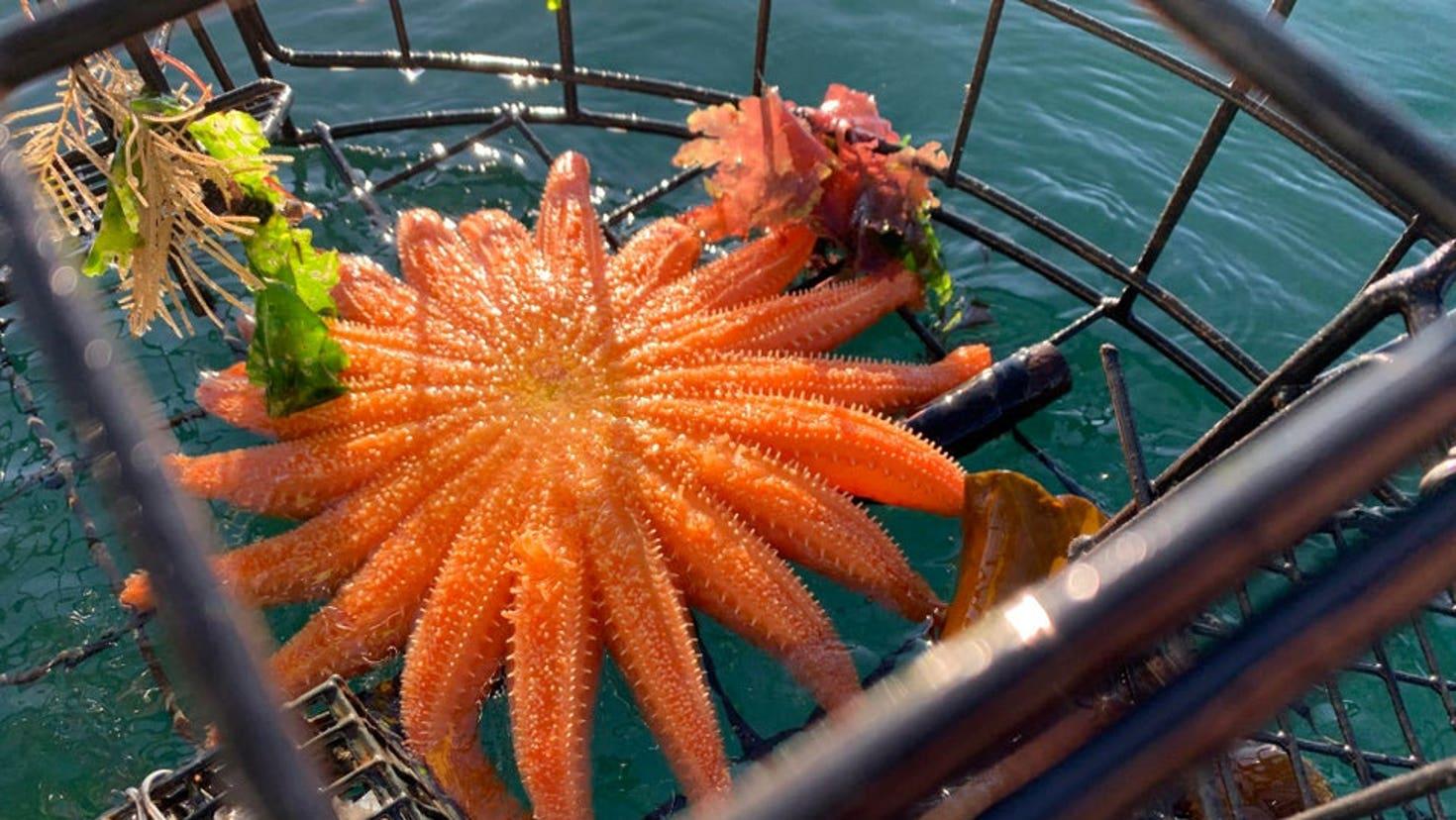 star-fish-shock-742173.jpg?ve=1&tl=1
