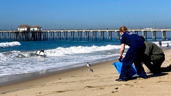 California oil spill: Harbor patrol searched, was unable to find fuel on the water