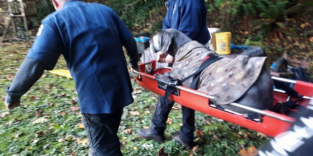 The dog was rescued by the Westport Fire and Rescue Squad.