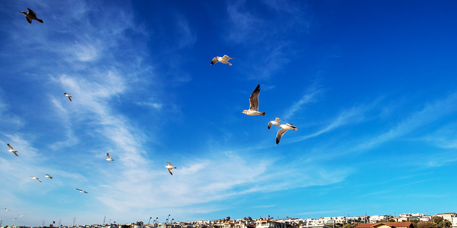 Birds take flight on the beach between 26th and 27th Streets at Bruces Beach in Manhattan Beach. Los Angeles County is trying to give the land back to the Bruce family, a Black family that was pushed off Bruces Beach a century ago by Manhattan Beach. Bruces Beach was one of the most prominent Black-owned resorts by the sea.The Bruce family used to have a resort right on the strand where the Los Angeles County Lifeguard Division office is and was popular with Black beachgoers. The Bruce's Beach plaque is at the top of the hill, but the actual Bruce property is the lifeguard building at the bottom of the hill, on the Strand at Bruce's Beach between 26th Street and 27th Street on Wednesday, March 24, 2021 in Manhattan Beach, CA. (Allen J. Schaben / Los Angeles Times via Getty Images)