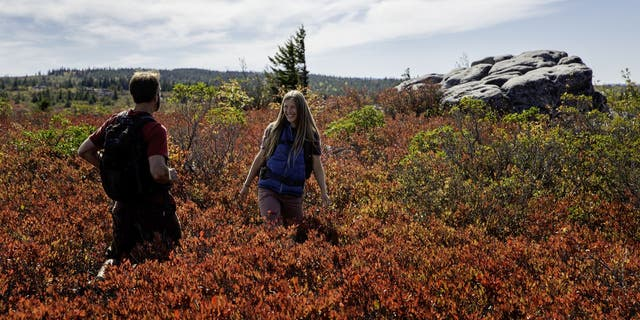 Dolly Sods Wilderness is a 17,371-acre recreation area within the Monongahela National Forest.