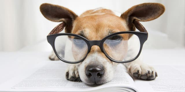 """Some dogs might be smarter than others. Hungarian researchers at Eotvos Lorand University are gathering evidence on this topic with a """"Genius Dog Challenge."""""""
