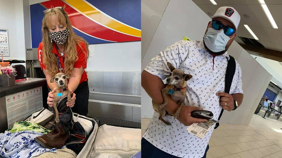 Stowaway dog found hiding in luggage at Southwest Airlines terminal