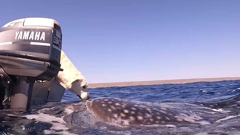 Dog kisses shark during boat trip off the coast of Australia