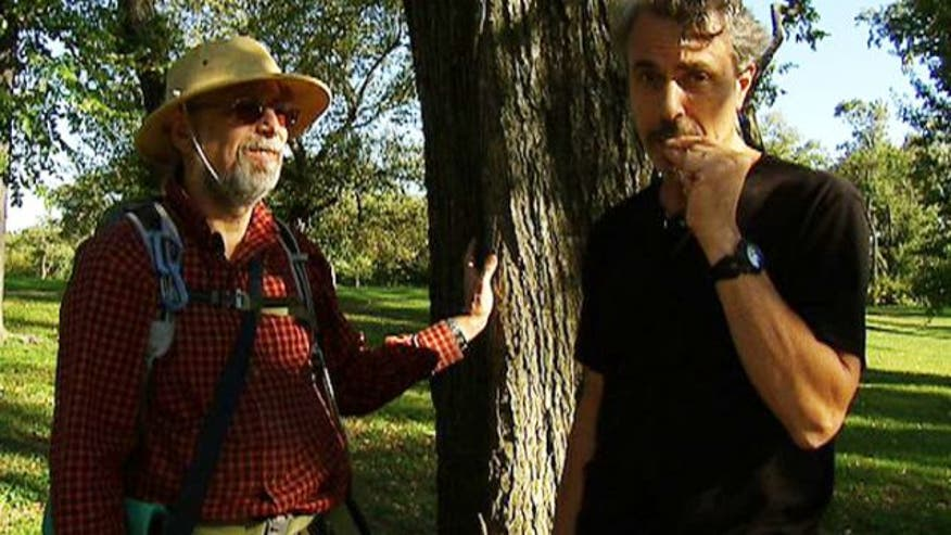 "The Medicine Hunter, Chris Kilham, goes in search of medicinal plants in Central Park with Steve ""Wildman"" Brill. They discover a plant that tastes good and helps to relieve pain, too"