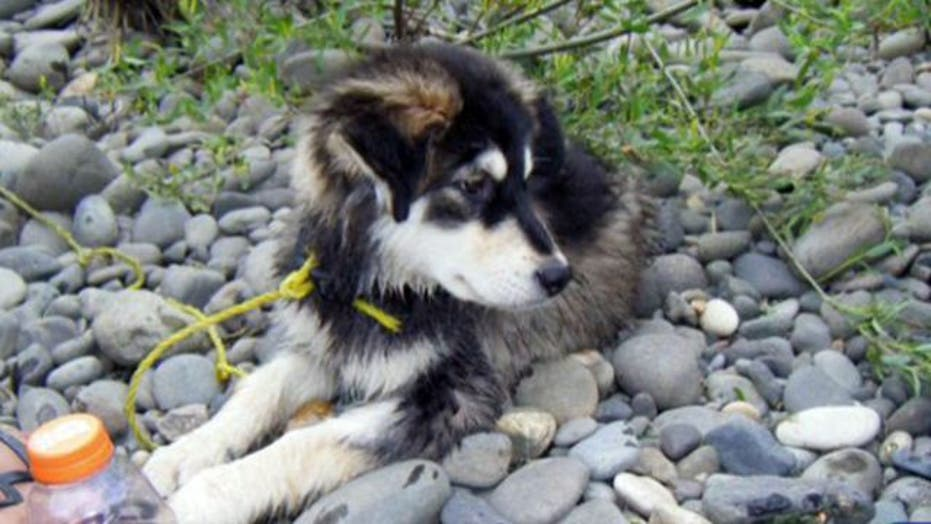 Finders keepers? Battle over custody of dog