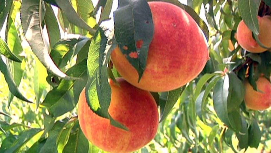 The 411 on peaches