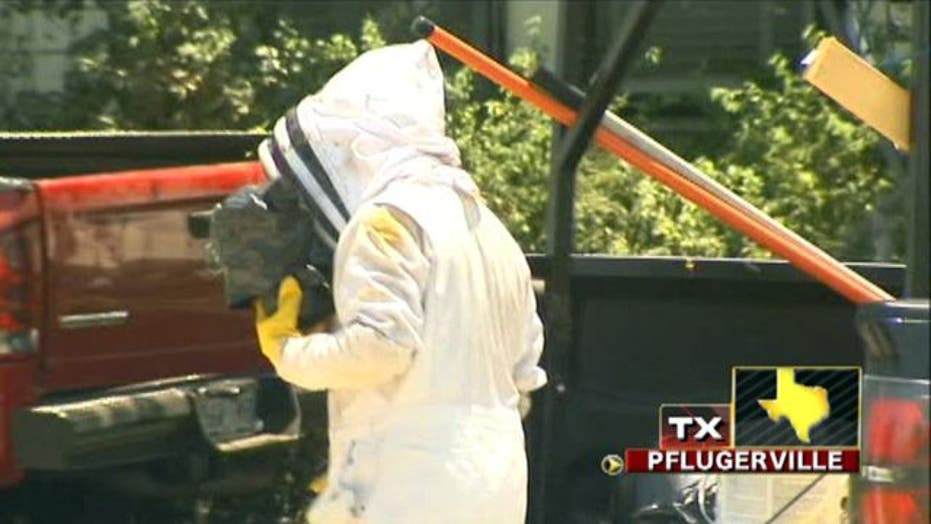 Across America: Africanized bees sting man over 300 times
