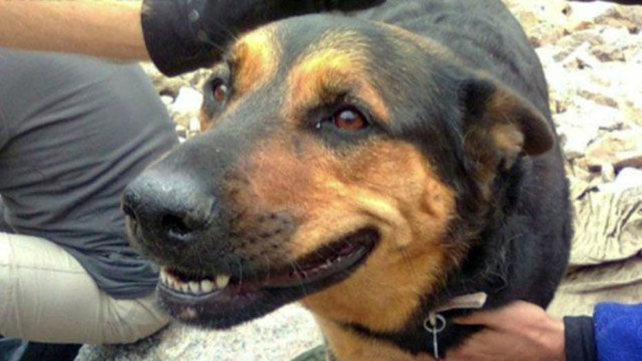 Man charged with animal cruelty for leaving dog on mountain