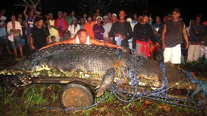 New tourist attraction to host 2400-pound reptile