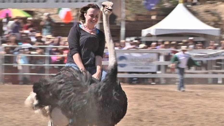 Camels, Ostriches, Zebras Oh My!