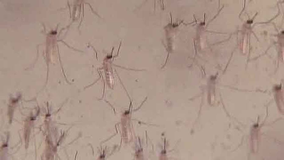 West Nile cases numbers rising nationwide