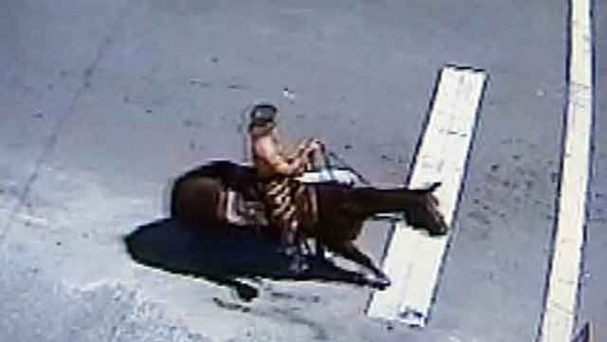 Cops chase down suspect on a horse in Florida