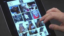 "Looking to adopt a new pet? A new mobile app called ""Pics for Pets"" puts your directly in touch with animal shelters in your area."