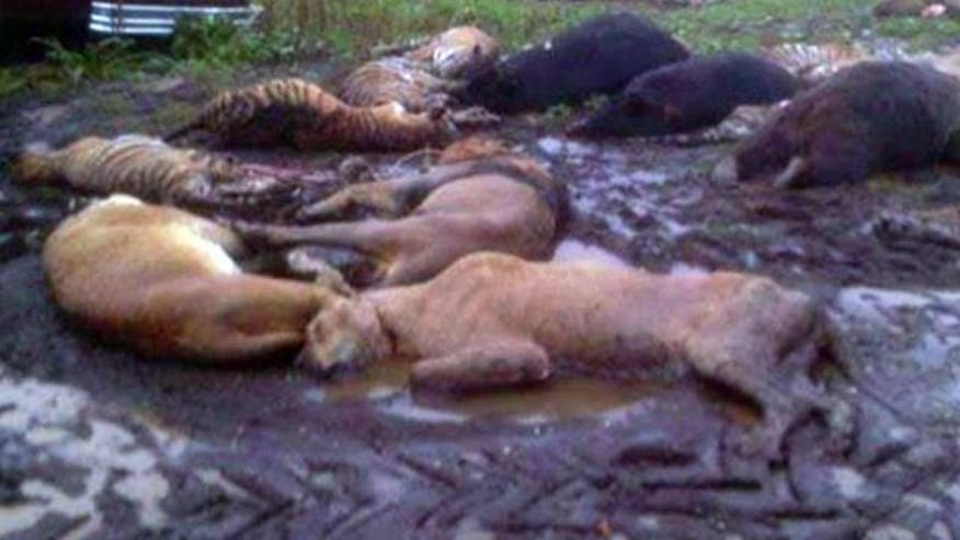 Ohio sheriff says 48 exotic animals were killed after their owner let them loose