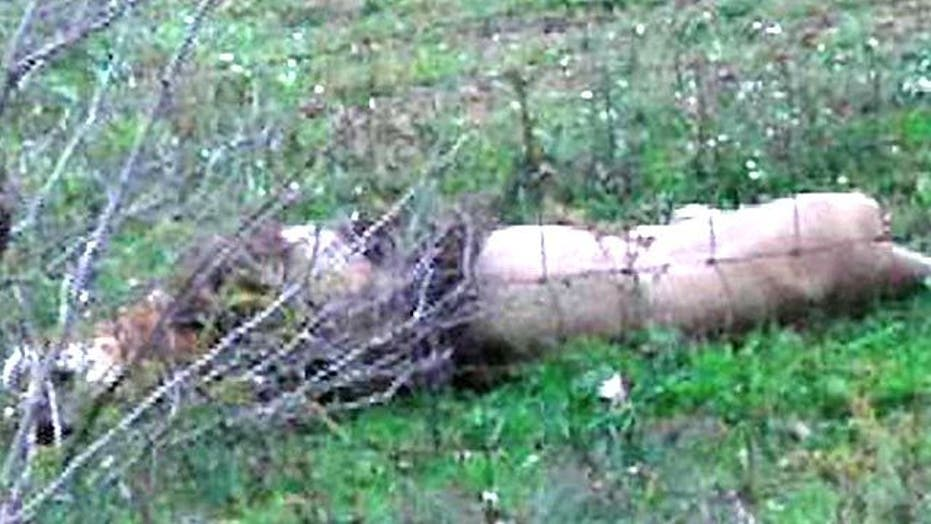 Ohio Man Discovers Lion, Tiger on Property