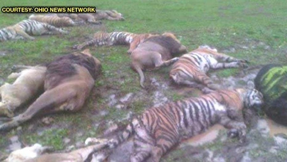 Hunt Ends for Escaped Wild Animals
