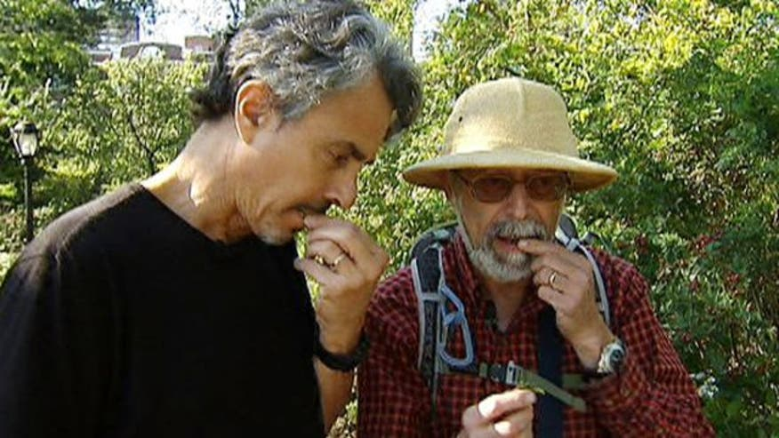 "The Medicine Hunter meets up with Steve ""Wildman"" Brill to hunt for delectable edibles throughout Central Park"